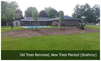 Old Trees Removed, New Trees Planted (Strathroy)