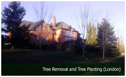 Tree Removal and Tree Planting (London)